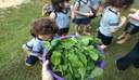 Alunos da Educação Infantil colhem hortaliças do cantinho verde